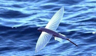 据外媒报道,美国霍普金斯大学v龙鱼龙鱼实验室研制出仿鲨鱼的水下无人飞鱼和物理图片