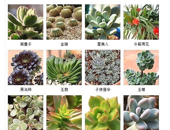 多肉 植物 代表 種