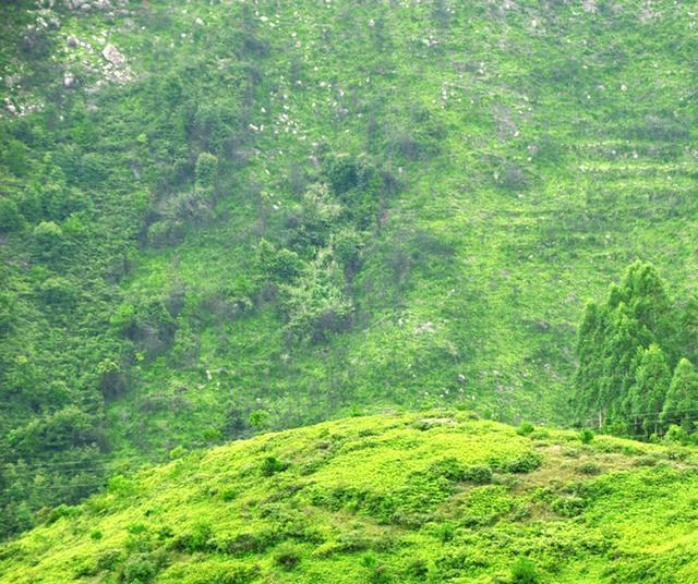 盎然生机的颜色草木绿,潮流色的扛把子 帮趣